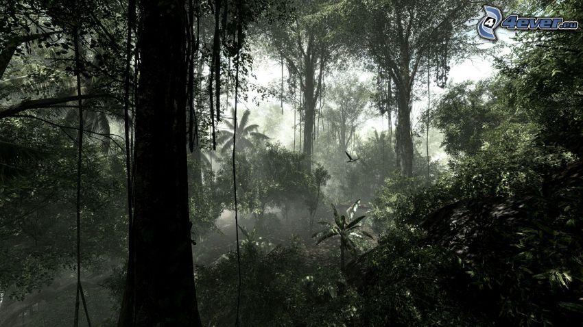 Crysis 3, dżungla, drzewa