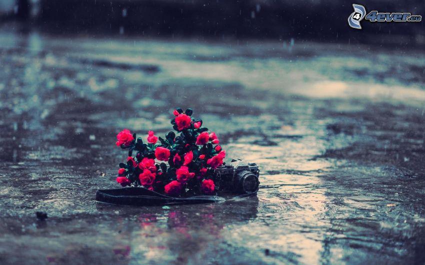 bukiet, różowe kwiaty, aparat fotograficzny, deszcz