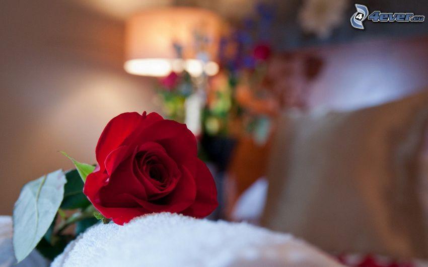 czerwona róża, lampa