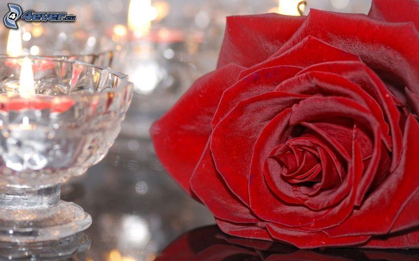 czerwona róża, szklanka