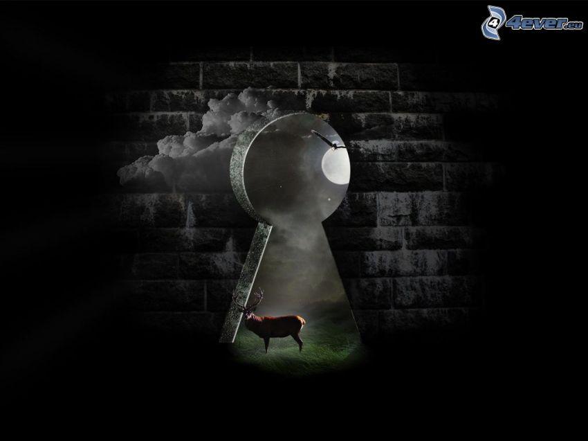 dziurka od klucza, jeleń, księżyc, ściana