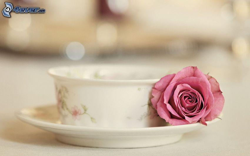 filiżanka, róża