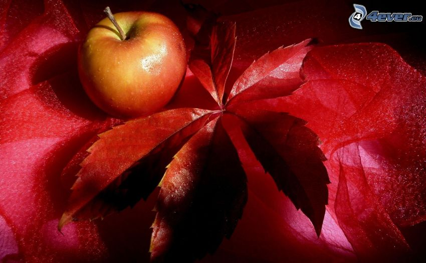 jabłko, czerwony liść, szalik