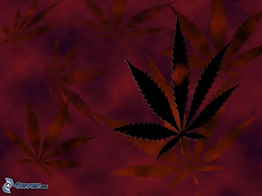 marihuana, liść, trawa, narkotyki