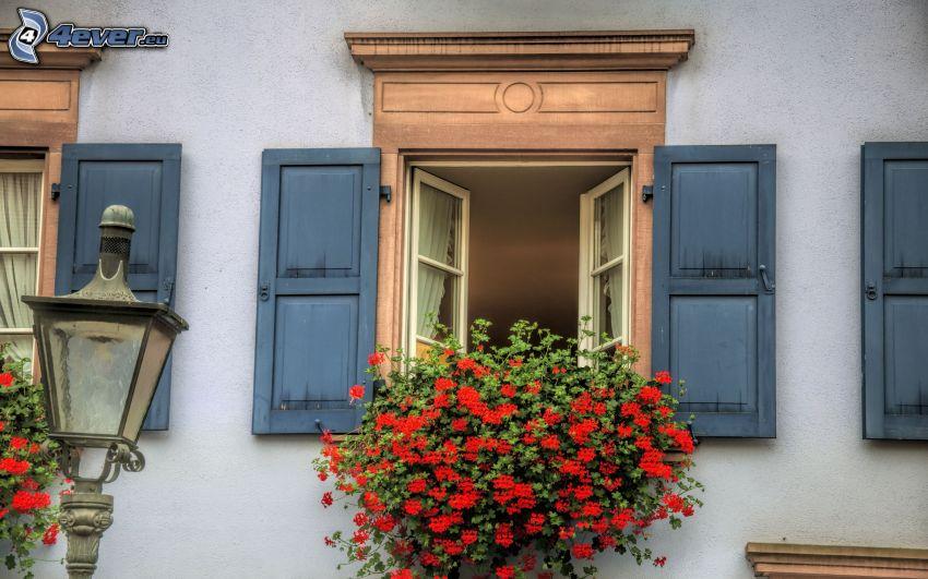 okno, pelargonia
