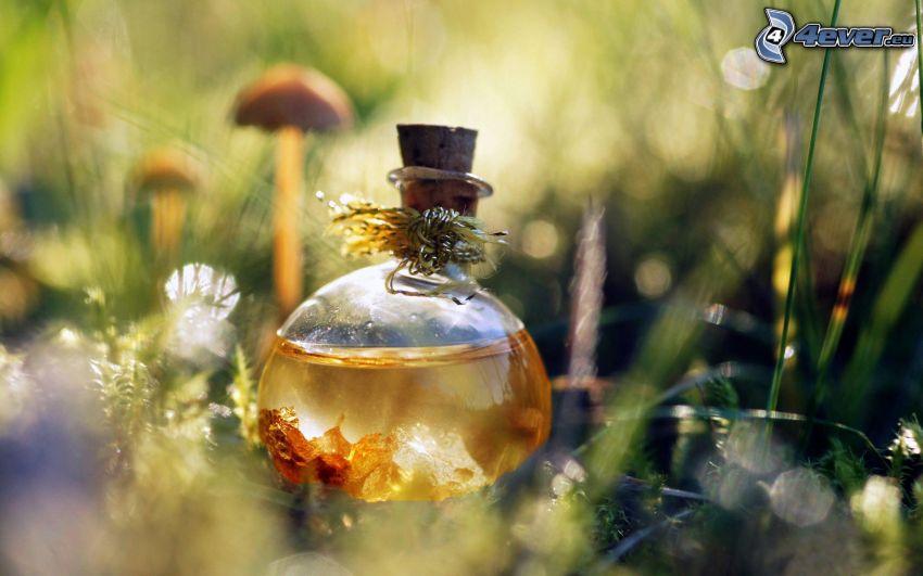 perfumy, trawa