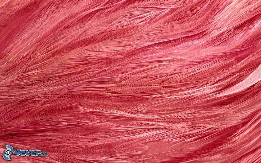 piórka, różowe tło