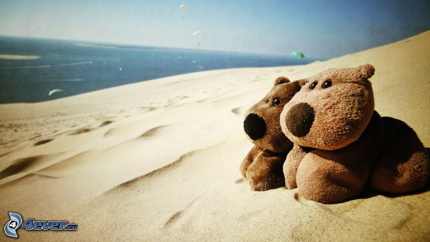 pluszowy pies, plaża, morze