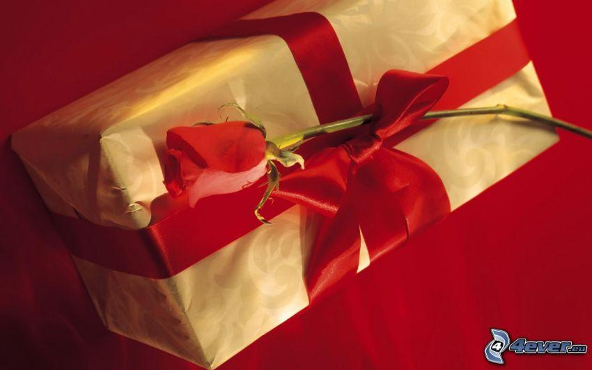 prezent, czerwona róża