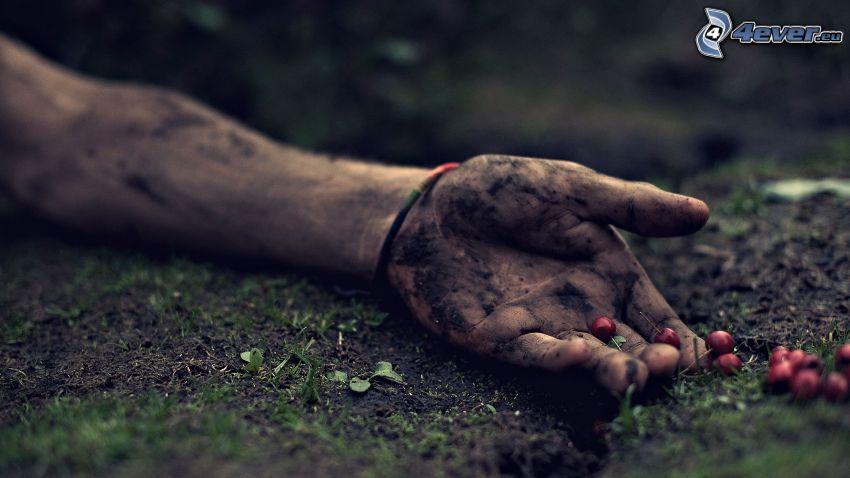 ręka, czereśnie, ziemia
