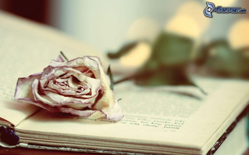 róża, książka