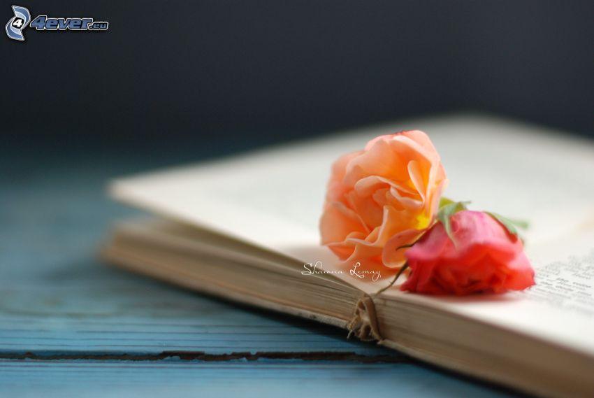 róże, książka