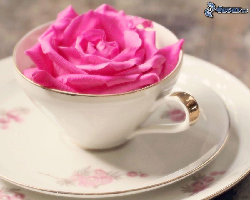 różowa róża, filiżanka