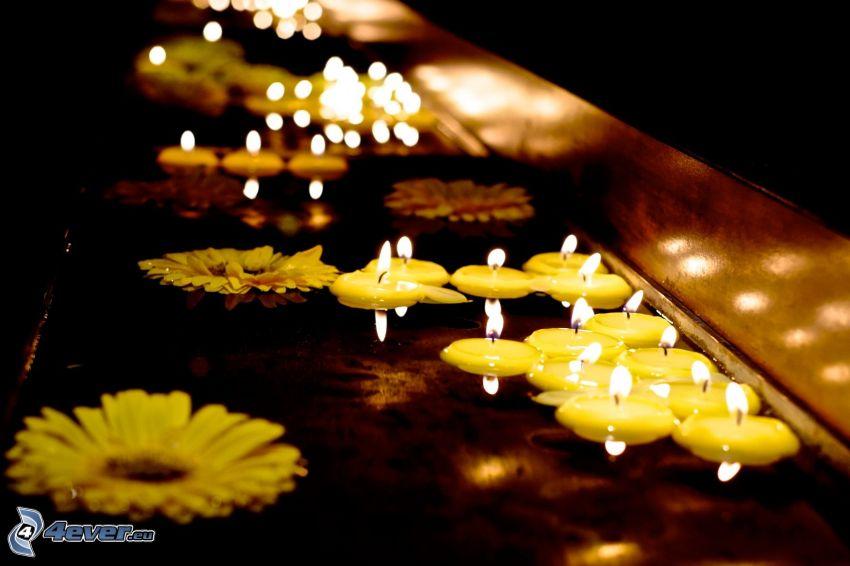 świece na wodzie, kwiaty, ciemność