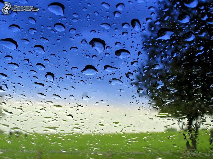 zroszone szkło, krople wody, drzewo