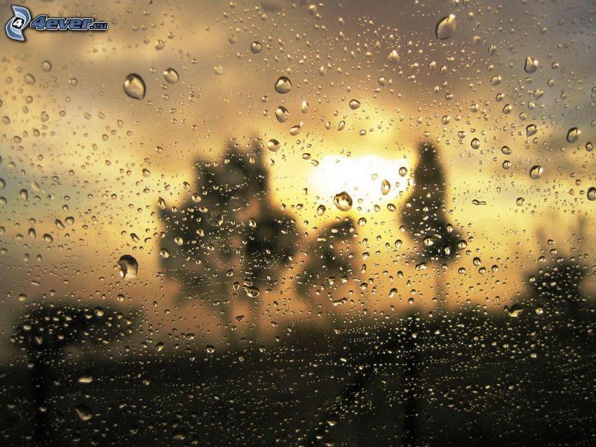 zroszone szkło, sylwetki drzew, zachód słońca