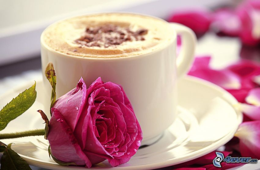 cappuccino, różowa róża
