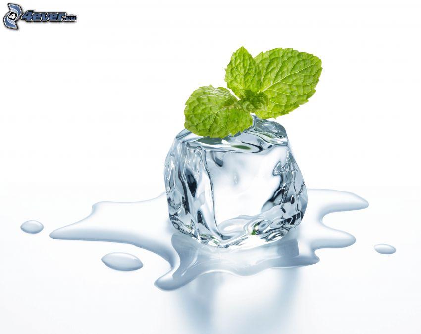 kostka lodu, liście mięty