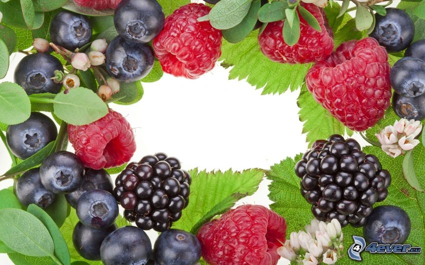 owoce leśne, jeżyny, jagody, maliny