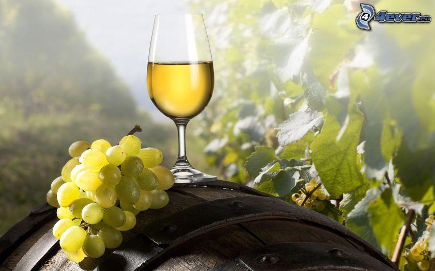 wino, winogrona, beczka