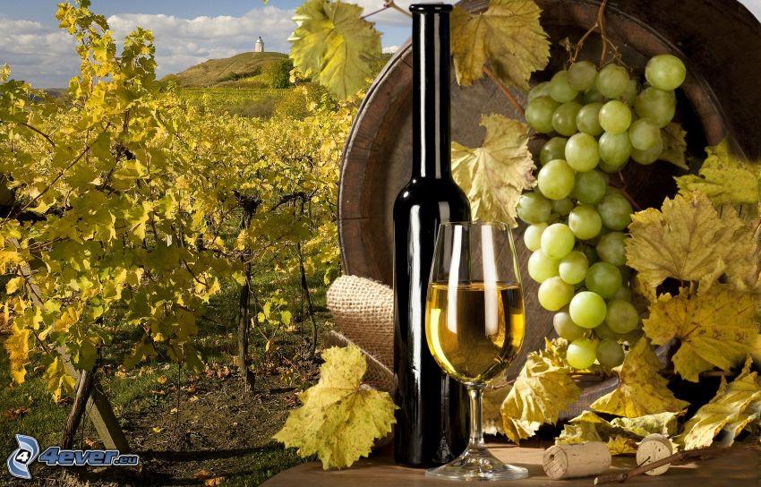 wino, winogrona, winnica