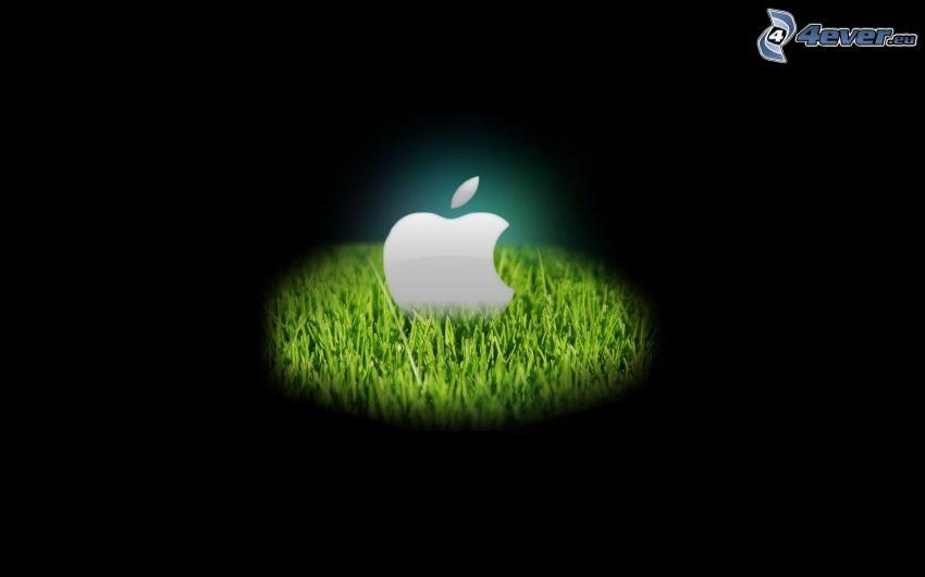 Apple, trawa, światło