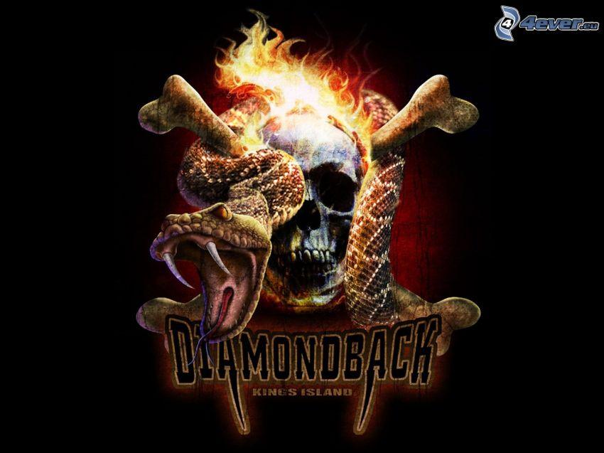 Diamondback, czaszka, wąż, ogień