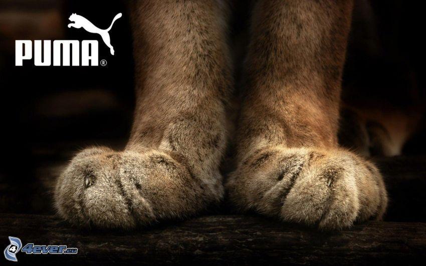 Puma, łapy
