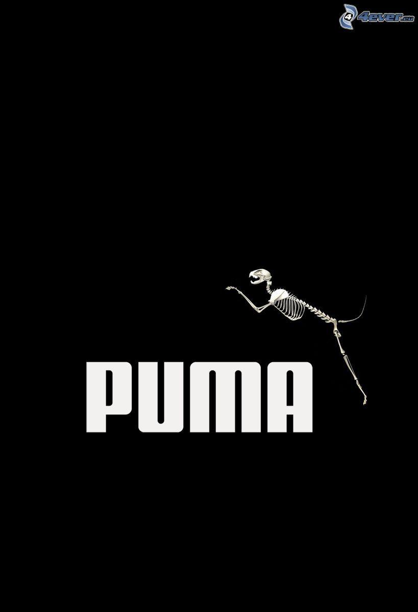 Puma, szkielet