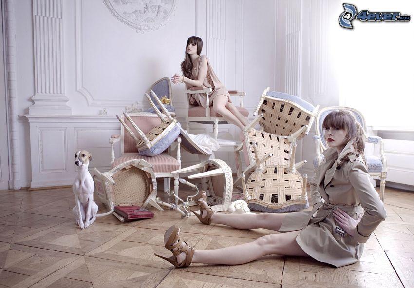 kobiety, pies, krzesła
