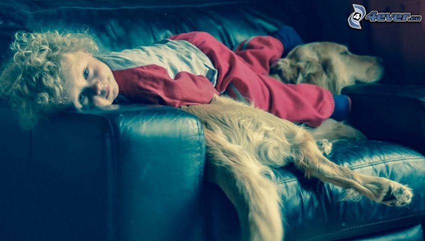 chłopczyk, śpiący pies, złoty retriewer