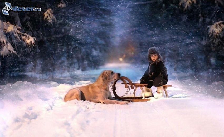 dziecko, pies, sanie, śnieżny krajobraz
