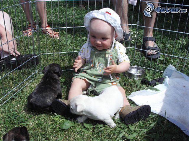 dziecko, szczeniaki, ogrodzenie