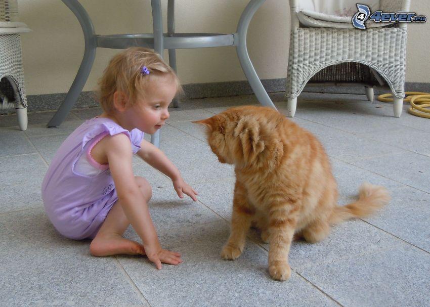 dziecko i kot, pstrokaty kot