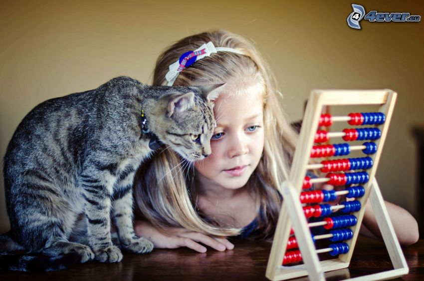 dziewczyna, szary kot, abakus
