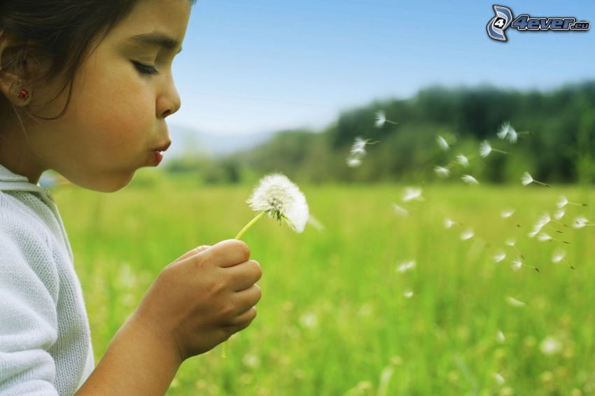 dziewczynka, dmuchawiec, nasiona mlecza