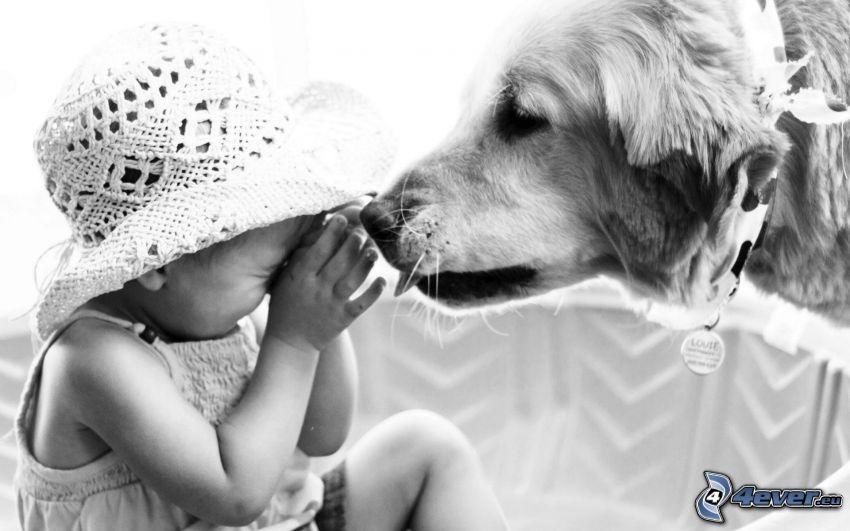 dziewczynka, kapelusz, złoty retriewer, czarno-białe zdjęcie