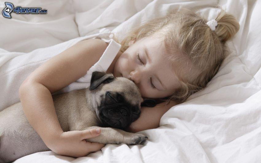 dziewczynka, mops, spanie