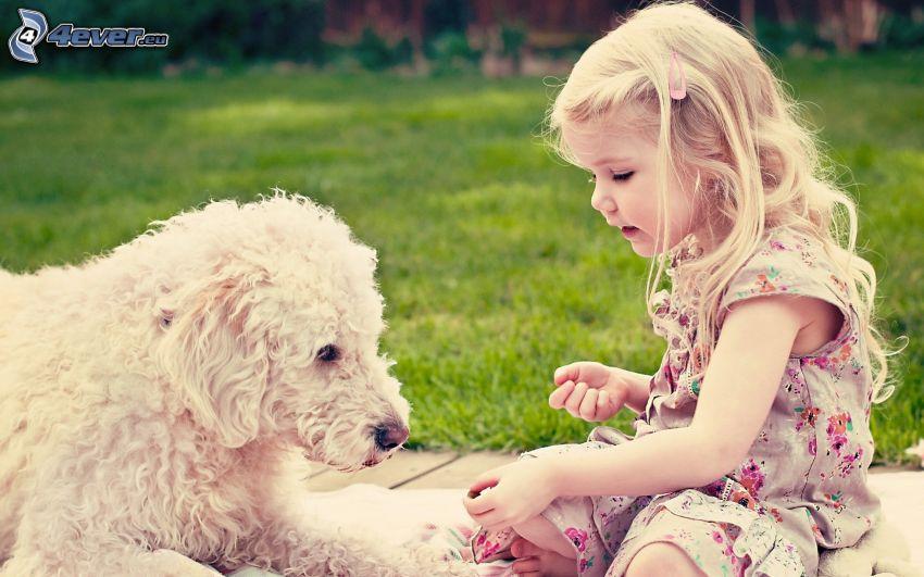 dziewczynka, pies