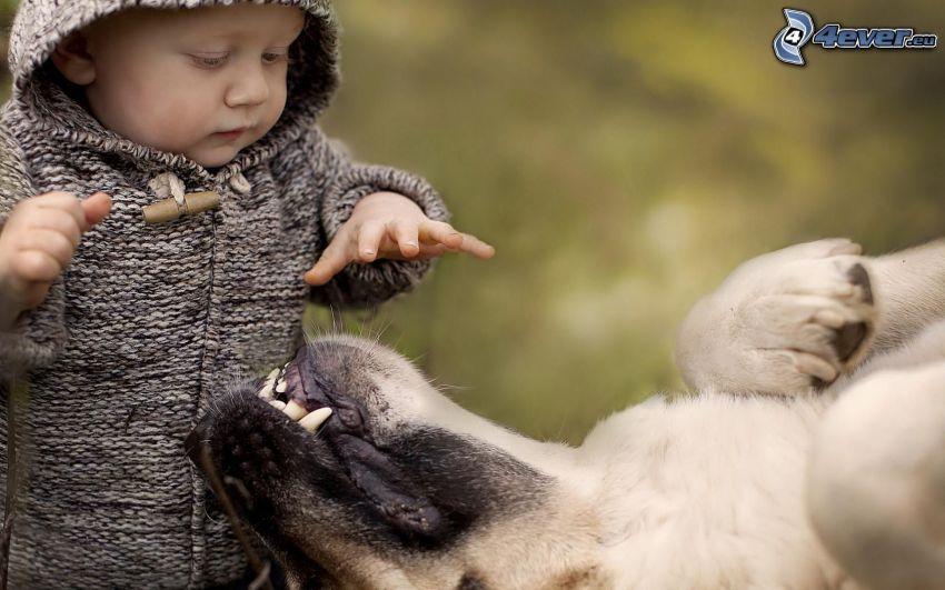 niemowlak, pies