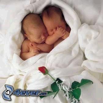 niemowlaki, dzieci, róża