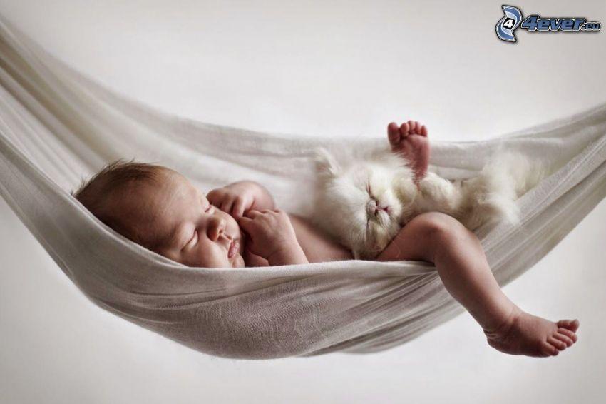 śpiące dziecko, Mały biały kotek, hamak