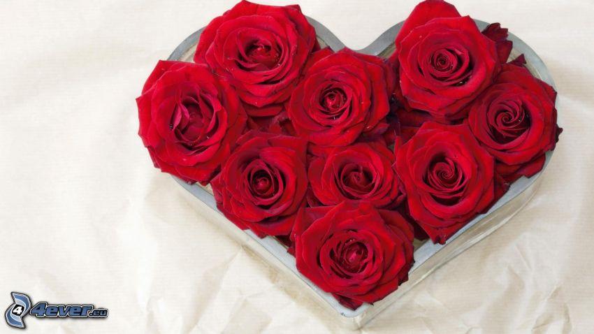 czerwone róże, serduszko