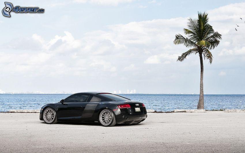 Audi R8, palma, morze
