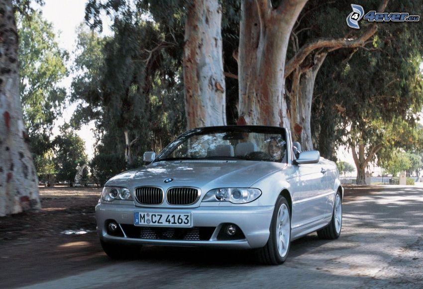 BMW 3, kabriolet, prędkość, ulica, drzewa