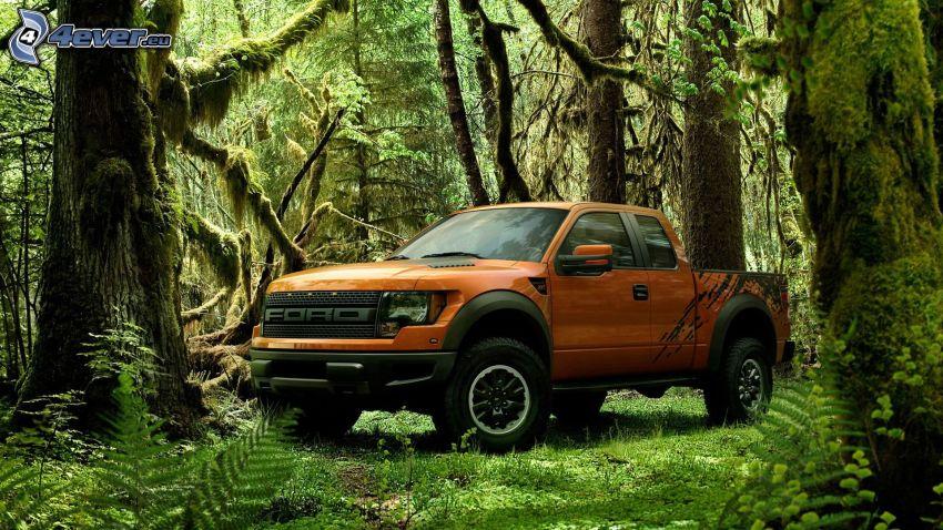 Ford F150 raptor, las, dżungla