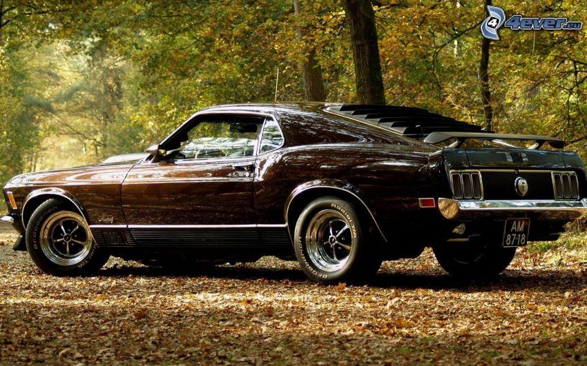 Ford Mustang, weteran, opadnięte liście