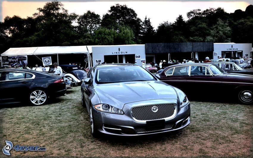 Jaguar, wystawa