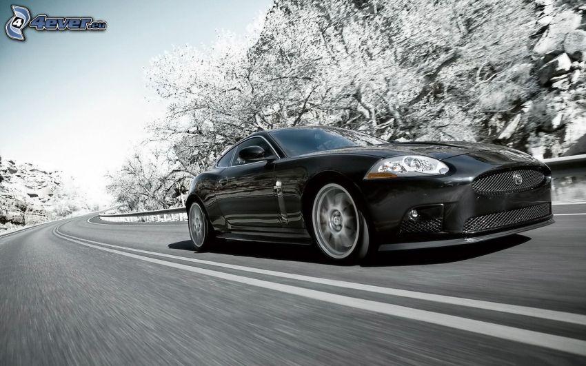 Jaguar XK, prędkość, czarno-białe zdjęcie