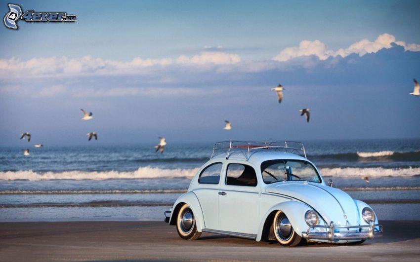 Volkswagen Beetle, lowrider, plaża piaszczysta, mewy, morze, fale